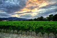 Napa Summer Sunset 2