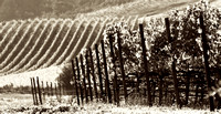 Fall In The Valley_pan_sepia