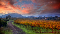 Wine Country Color